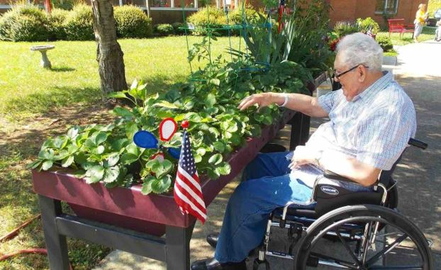 senior-man-in-wheelchair-checking-his-plants-in-his-backyard-garden